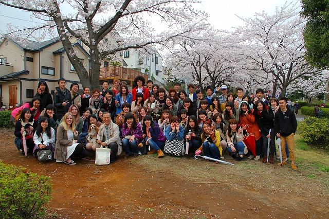 桜祭りとニーノ (26)