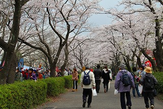 桜祭りとニーノ (47)